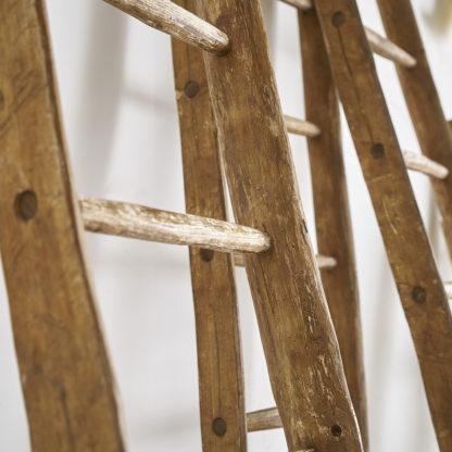 Echelle de récolte bois bouleau